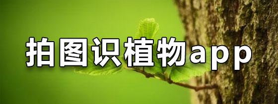 拍图识植物app