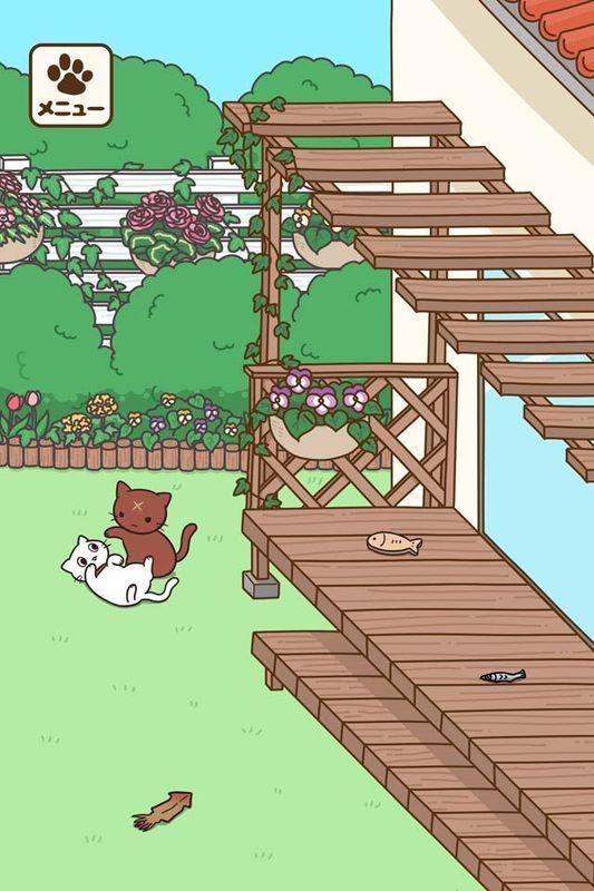 饲养猫咪的生活_图片4
